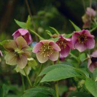 christian-roses-2197790_1280 Waldgarten Pixabay