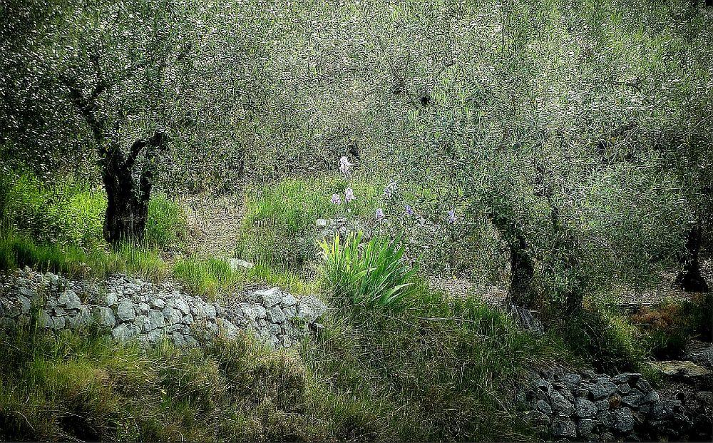 Mediterraner Garten in Dalmatien